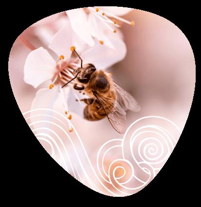 abejas-moti
