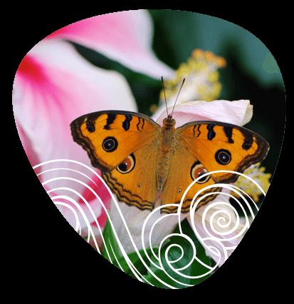 mariposas-fauna